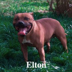 ELTON-ICON-copy
