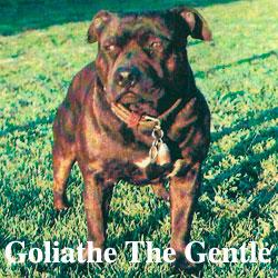 Goliathe-icon