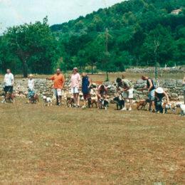 La Classe Des Descendants De Ruadh Of Hawkslee