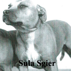 Sula-sgier-Icon