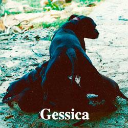 gessica-icon