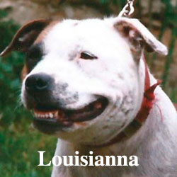 louisianna-icon