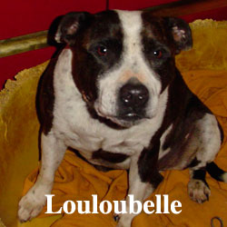 louloubelle-icon