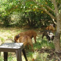 Louloubelle Donne Un Coup De Main A Ses Amis Avec les Travaux du Jardin