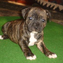 Violaine Puppy Love