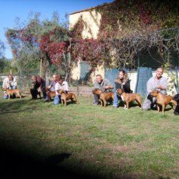 Fun Day Au Staffordshire Bull Terrier Symposium, Callian