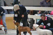 Jenny Wren en route de gagner deux premières places et une deuxièmes place