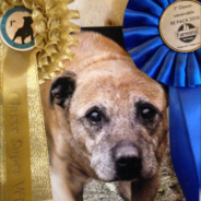 Ruadh just before she died she won two vétéran classes‏